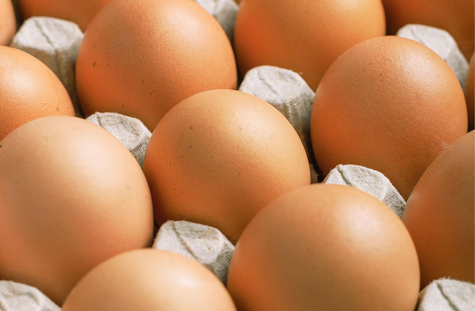 Eier auf Höckerpappe